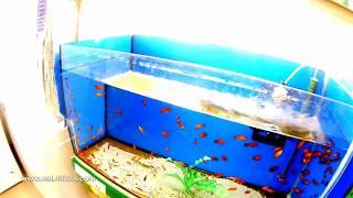 Fisch und reptil Выставка аквариумных рыбок и рептилий, Sindelfingen 3