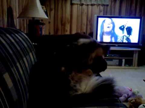 My dog hates Glee