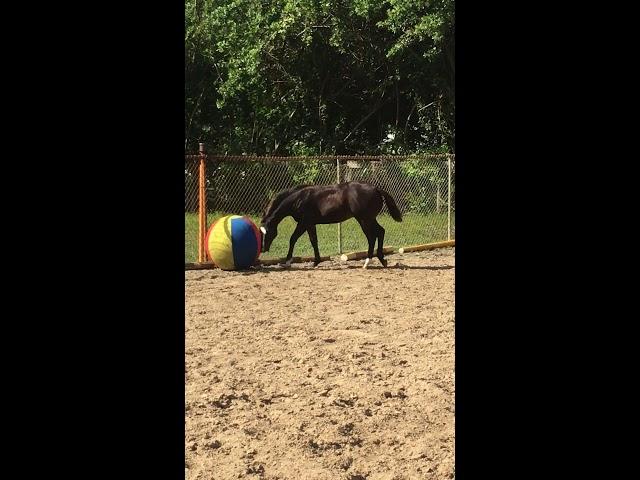 Elliott loves his ball