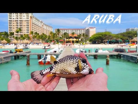 Dock Fishing For Tropical Species - Aruba Pt. 1