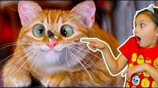 ХРАБРЫЕ КОТЫ))! ЛУЧШИЙ НЕ ЗАСМЕЙСЯ ЧЕЛЛЕНДЖ с КОТАМИ! Funny Cats Попробуй не засмеяться Валеришка