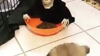 Pour éviter que votre  chien mange trop vidéo humour