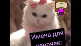 Как назвать котенка??🌝