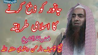 Janwar Ko Zibah Karne Ka Islami Tareeqa By Sheikh Tauseef ur Rehman Rashidi Hafizahullah