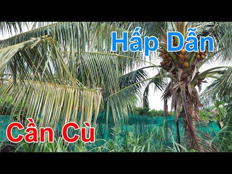 Vị Vua Huyền Thoại Tập 34 Việt Sub , Phim Ấn Độ