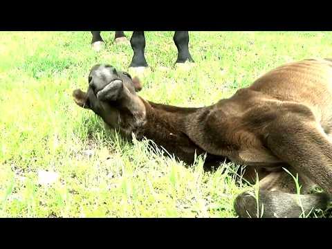 Heartbreak & Horse Racing, Episode 1, The Beginning