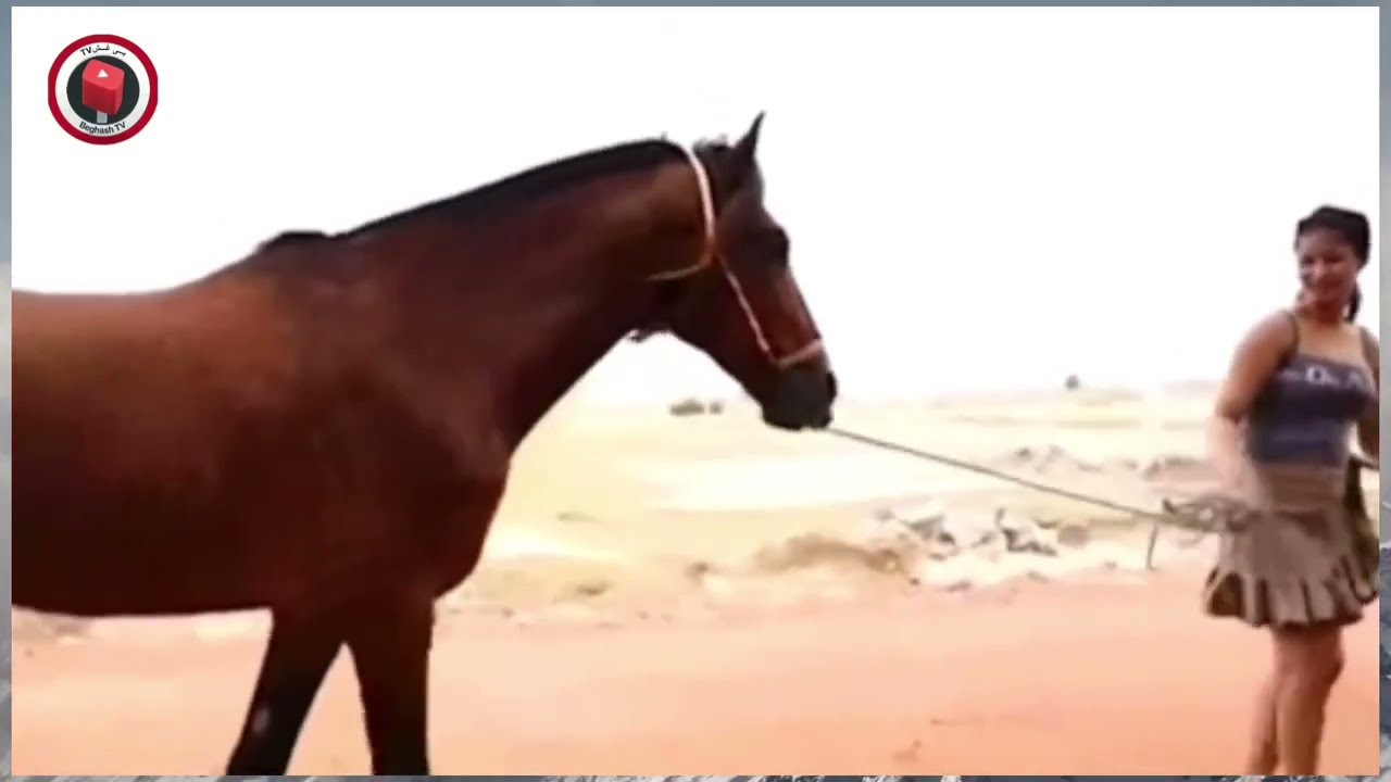 Download Horse S.e.x with Beautiful Girl !