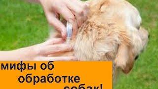Мифы об обработке собаки  Как правильно обрабатывать собаку