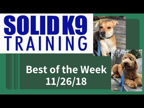 Solid K9 Training Center Best of the Week 11/26/18