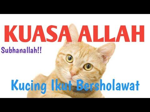 Hadrah Sholawat Nabi Kucing