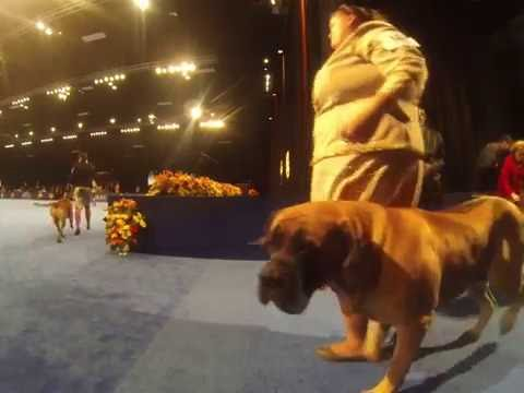 The National Dog Show (2016) - Working Dogs Preview