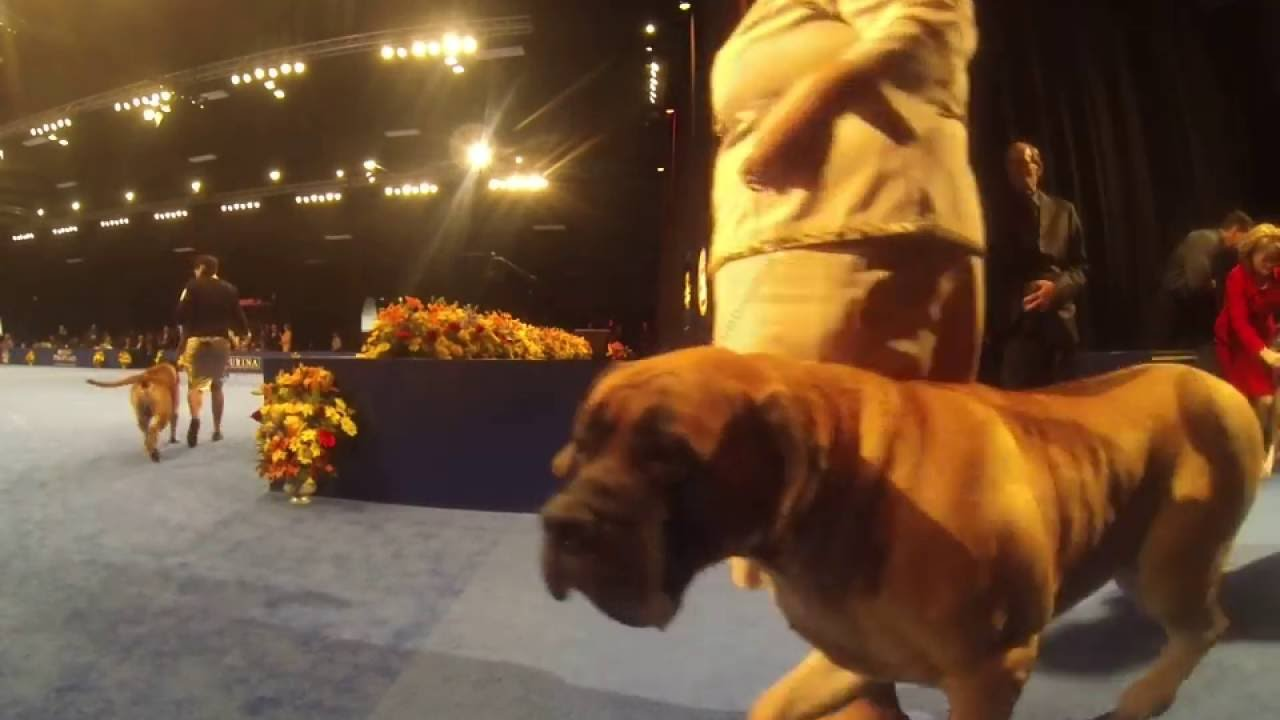 Thanksgiving Rescue Dog Show
