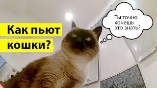 Как пьют кошки - лакают языком вперед или назад?!