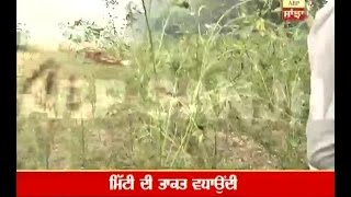Farmer got profit of 2.5 lac from one acre land, Know How?