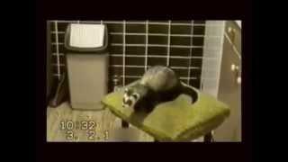 Эти милые животные, СМЕШНОЕ видео