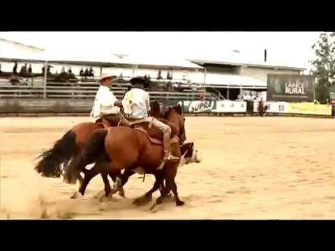 Bocal de Prata Machos 2017 - Feitiço Cavalera