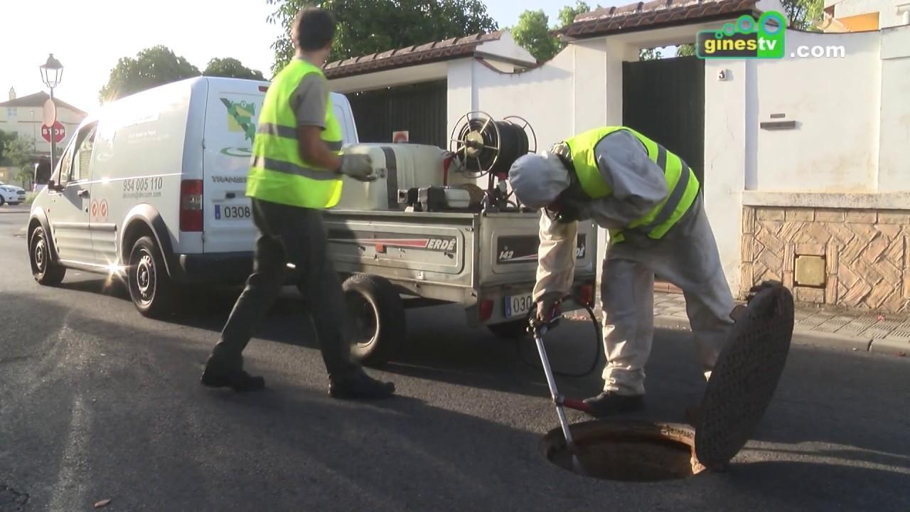 Nueva campaña para la eliminación de plagas en el alcantarillado público de todo el municipio