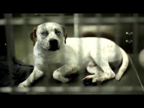 Franklin County Dog Shelter Commercial
