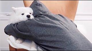 [ENG Sub] Do dogs like to be hugged?