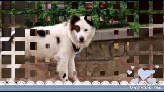 Собака точка ком слайд-шоу 🐶