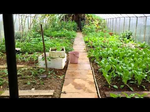 Organic Farming in Singapore.  Video 7 of 10.