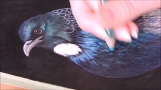 """Tui"" Time-lapse Drawing in coloured pencil"