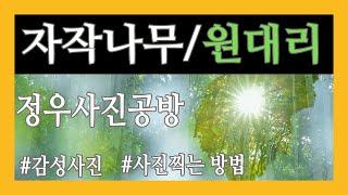 자작나무/원대리/다중촬영/틸팅
