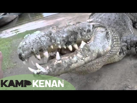 World's Largest Crocodile in Captivity : Kamp Kenan S3 Episode 10