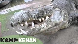 connectYoutube - World's Largest Crocodile in Captivity : Kamp Kenan S3 Episode 10