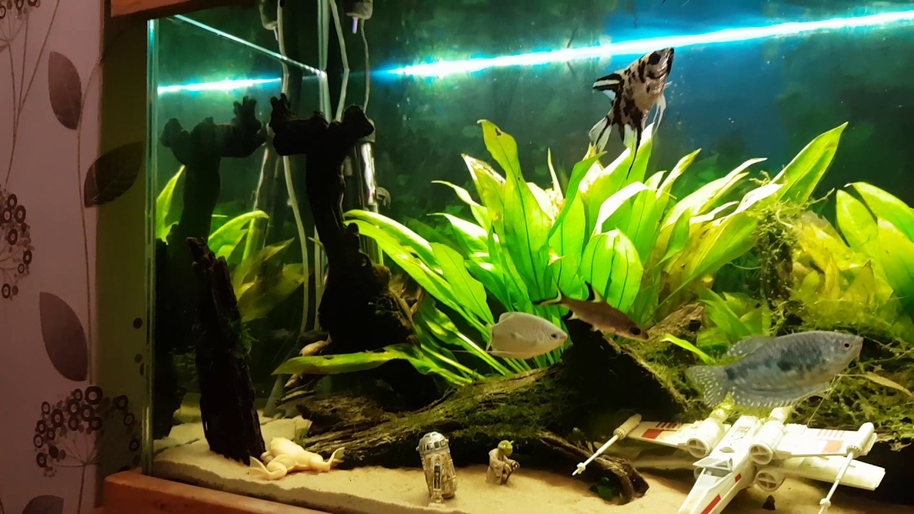 Deco aquarium star wars for Aquarium decoration set