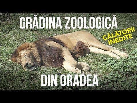 Itinerarii, plimbări, însemnri de călătorie - Grădina zoologică din Oradea