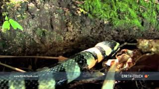 Deadly sea snake slithers onto land