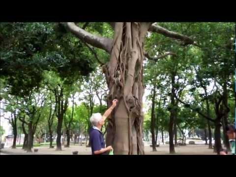 台北二二八和平公園リス 228 Peace Memorial Park squirrel