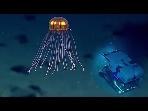 5 Scariest Creatures Caught At The Bottom of the Mariana Trench!