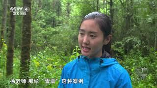 [远方的家]世界遗产在中国 栗子坪:探访大熊猫的放归地| CCTV中文国际