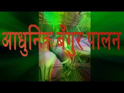 बँगुर पालन-2074/2017 new video bangur palan kasari garne- video by Bishnu Shrestha