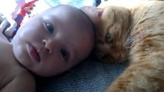 Дети и кошки. Забавные, смешные, прикольные видеоролики.