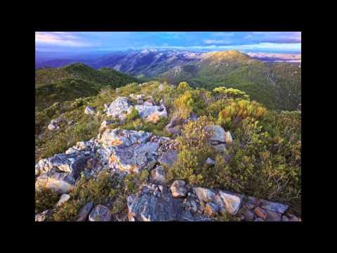 The Tarkine Wilderness in Tasmania - keep The Tarkine wild!