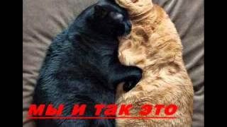 Женщины-Кошки.wmv