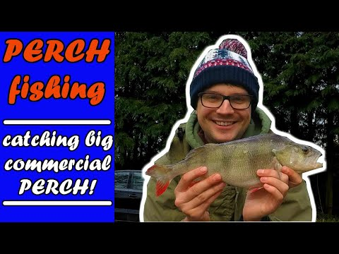 PERCH FISHING| How To Catch BIG Commercial Fishery PERCH!