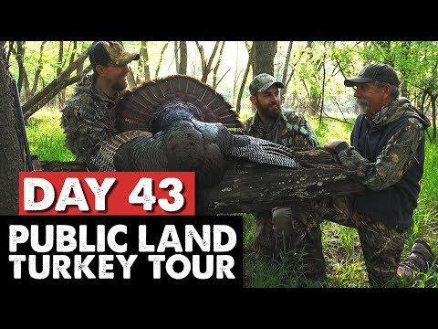 NO DECOY? NO PROBLEM! - 4 TOMS COME TO THE CALL - Public Land Turkey Tour Day 43