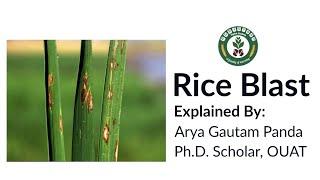 Blast Disease of Rice| Plant Pathology
