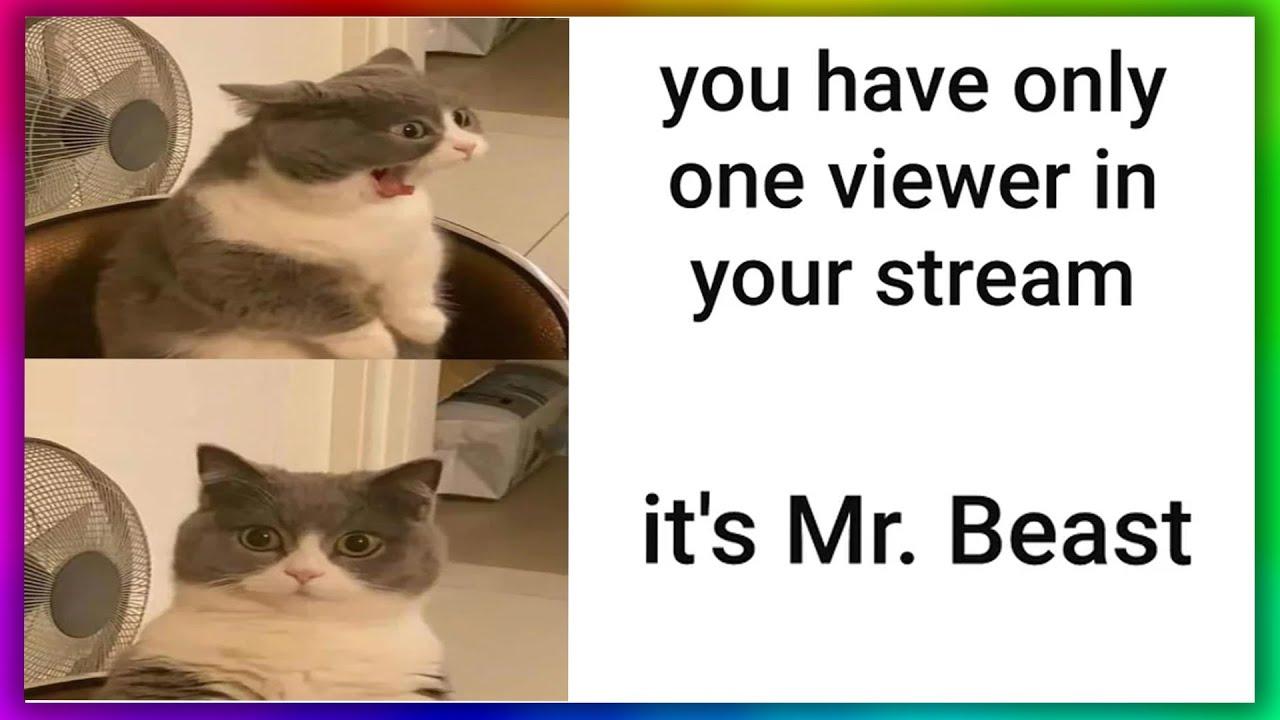 memes that have 0 VIEWS