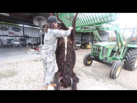 How To Skin And Quarter An American Bison!!!!