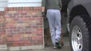 Unusual Dog Walk
