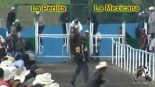 LA PERLITA VS LA MEXICANA