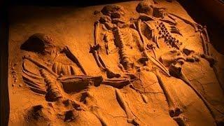 Секс в каменном веке  - Фильмы документальные