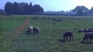 Бизнес идея - разведение овец , овцеводство как бизнес с нуля видео. Какой бизнес в деревне?(Овцеводство как бизнес является очень выгодным бизнес проектом. Идеи малого бизнеса с нуля производство...., 2015-03-05T22:31:54.000Z)