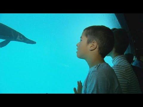 euronews (en français): Un aquarium géant ouvre à Lausanne