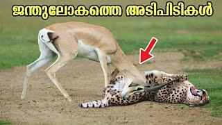 പലരും കണ്ടോ വഴി ഓടുന്നുണ്ട് ? ! Top 10 Animal Videos   Malayalam   Animal Fact   Kerala   Facts Mojo